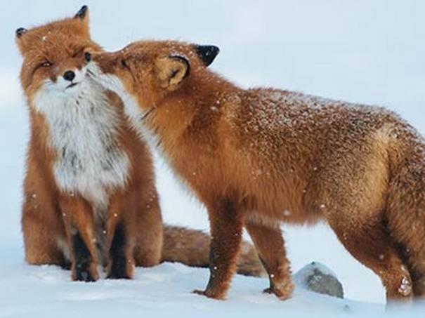 amor-mundo-animal-2