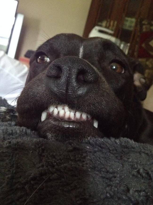animais-sorrindo-15