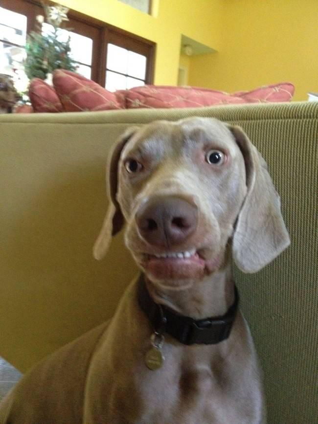 animais-sorrindo-17