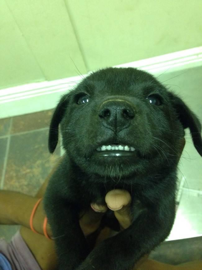 animais-sorrindo-2