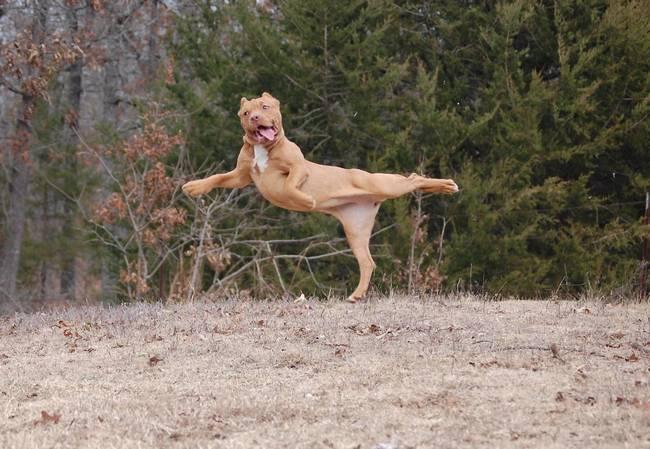 cachorros-em-posições-engraçadas-14