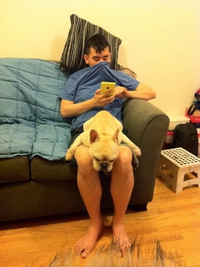 cachorros-em-posições-engraçadas-15