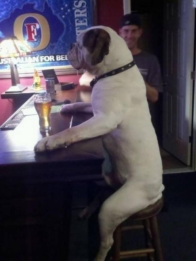 cachorros-em-posições-engraçadas-17