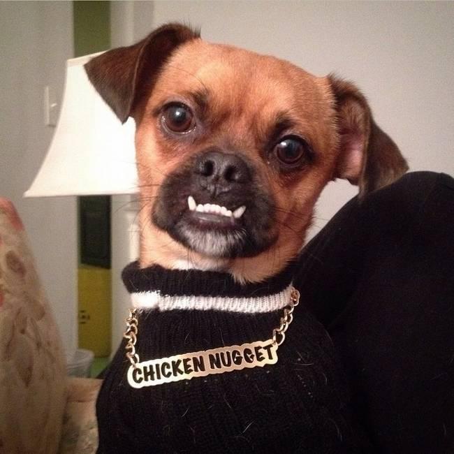 cachorros-em-posições-engraçadas-20