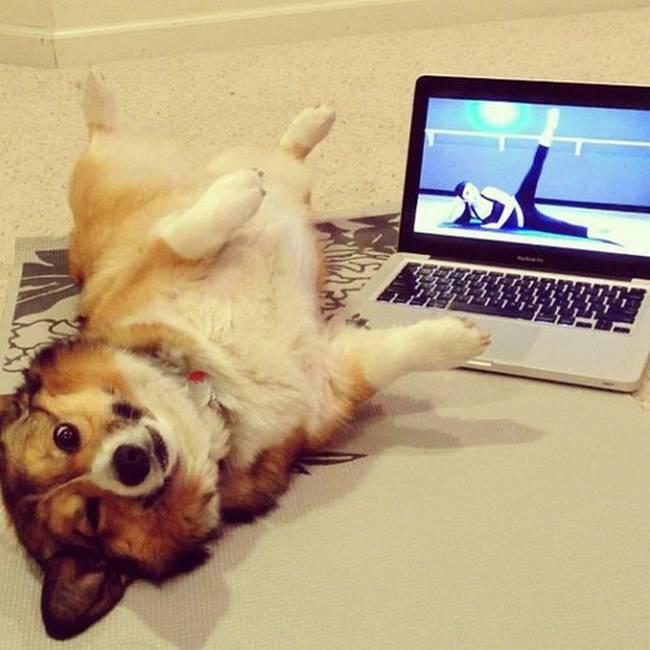 cachorros-em-posições-engraçadas-21