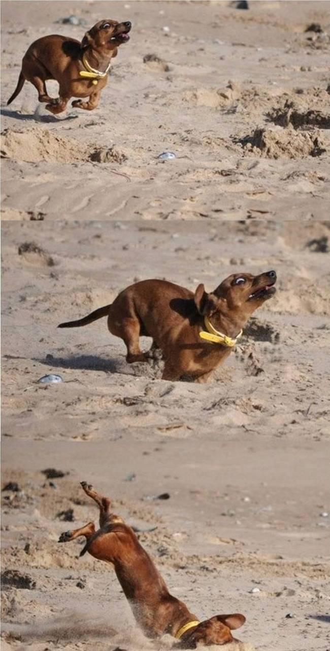 cachorros-em-posições-engraçadas-3