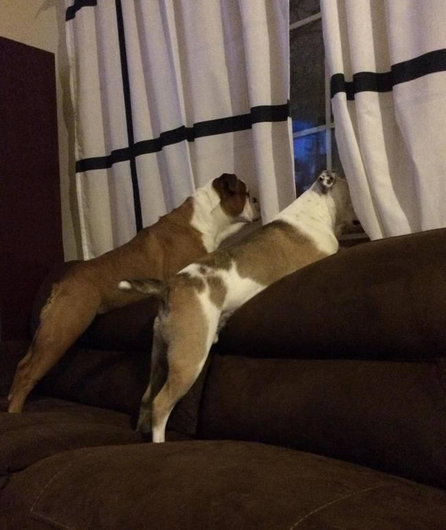 cachorros-em-posições-engraçadas-5
