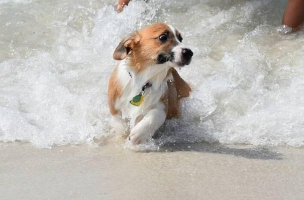 cachorros-medrosos-13