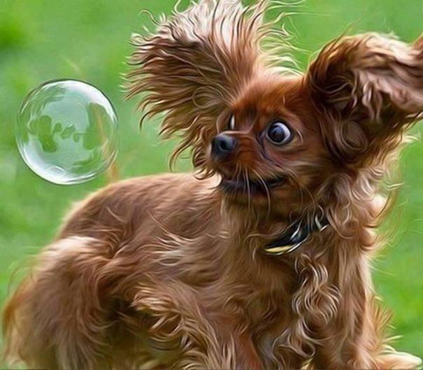 cachorros-medrosos-14