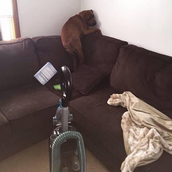 cachorros-medrosos-5