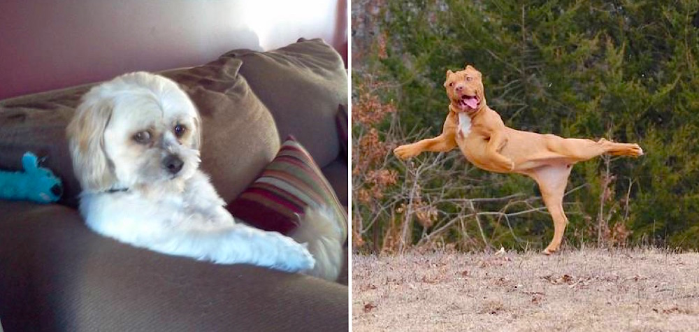 25 Cães que foram pegos em situações bem engraçadas