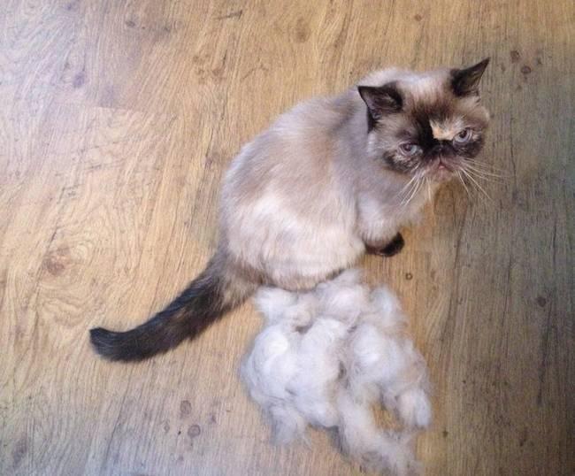 dicas-para-donos-de-gatos-18