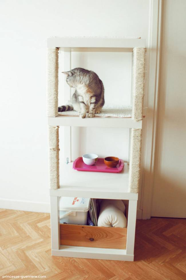 dicas-para-donos-de-gatos-2