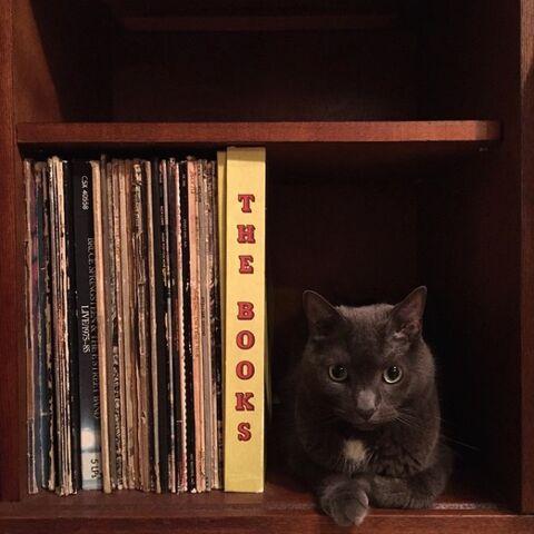 22 truques que todas as pessoas que têm gatos precisam saber