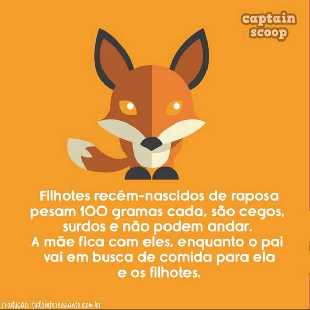 fatos-sobre-animais-9