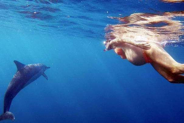 Sea Monkey Pregnant  Bottom of tank  YouTube