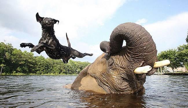 amizades-incomuns-com-animais-1