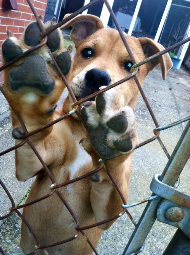 animais-se-fazendo-de-vítima-8