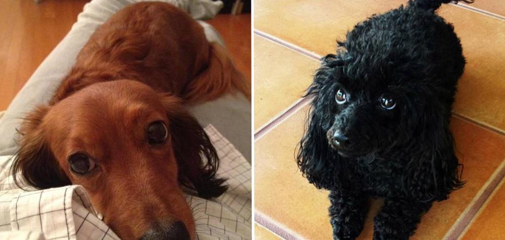 25 Animais que entendem bem – até demais – da arte de se fazer de vítima