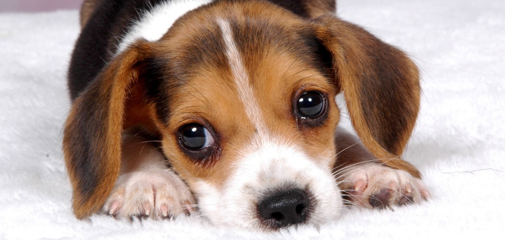 9 Motivos para você dar mais carinho ao seu cachorro