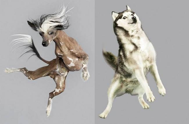 cachorros-voadores-1