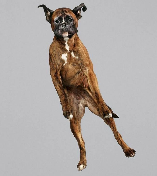cachorros-voadores-10