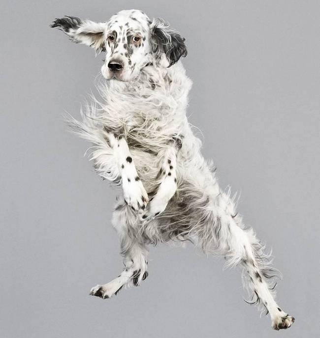 cachorros-voadores-11