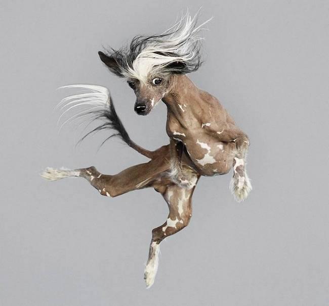 cachorros-voadores-12