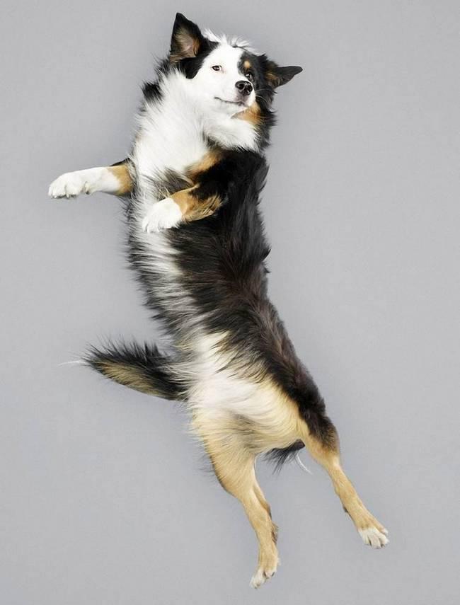 cachorros-voadores-13