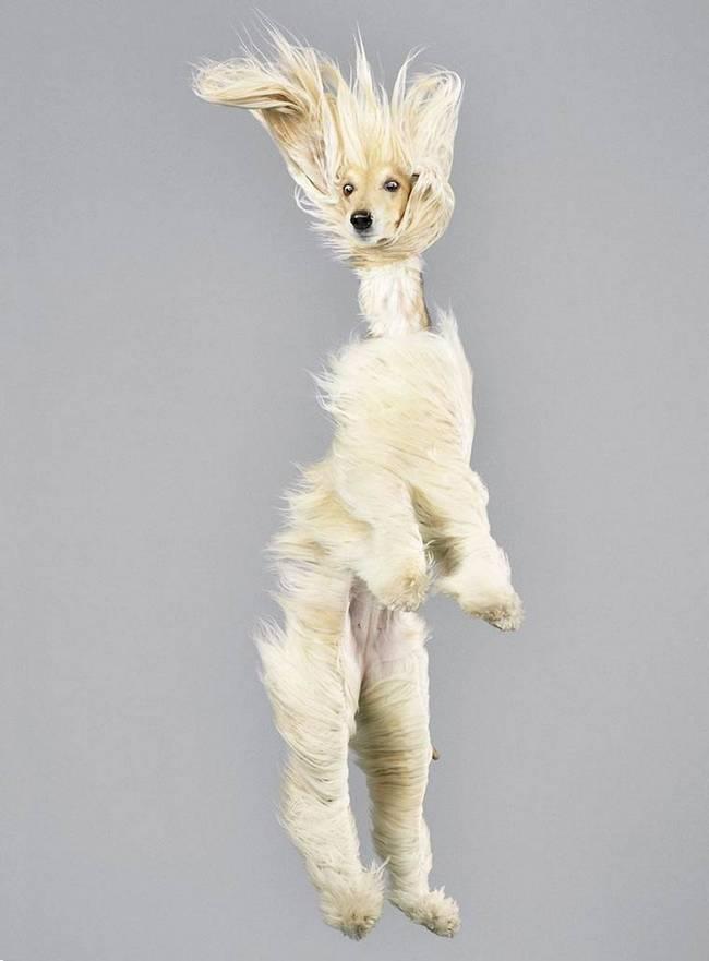 cachorros-voadores-15