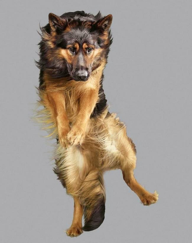 cachorros-voadores-16