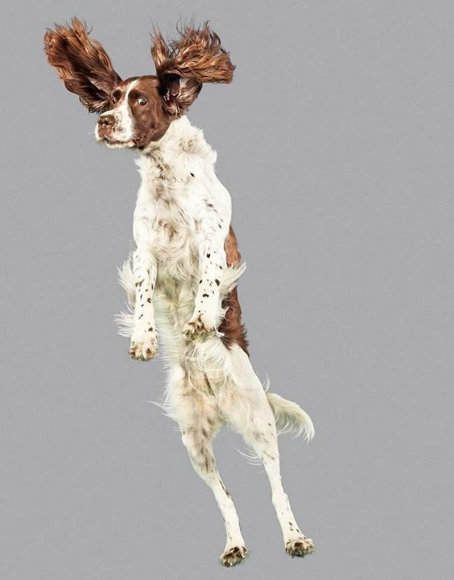 cachorros-voadores-17