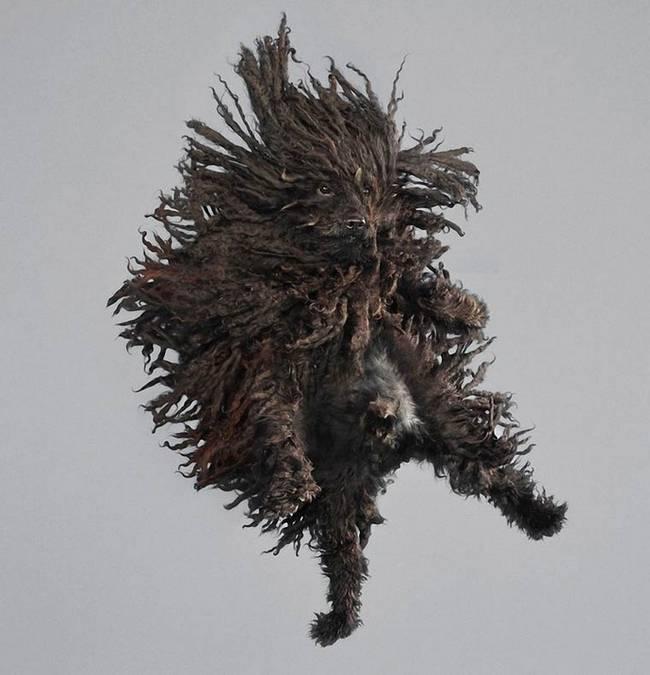 cachorros-voadores-2