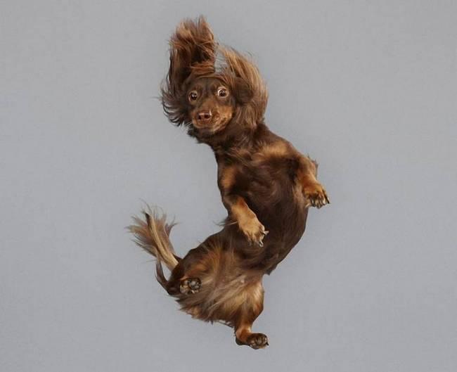 cachorros-voadores-3