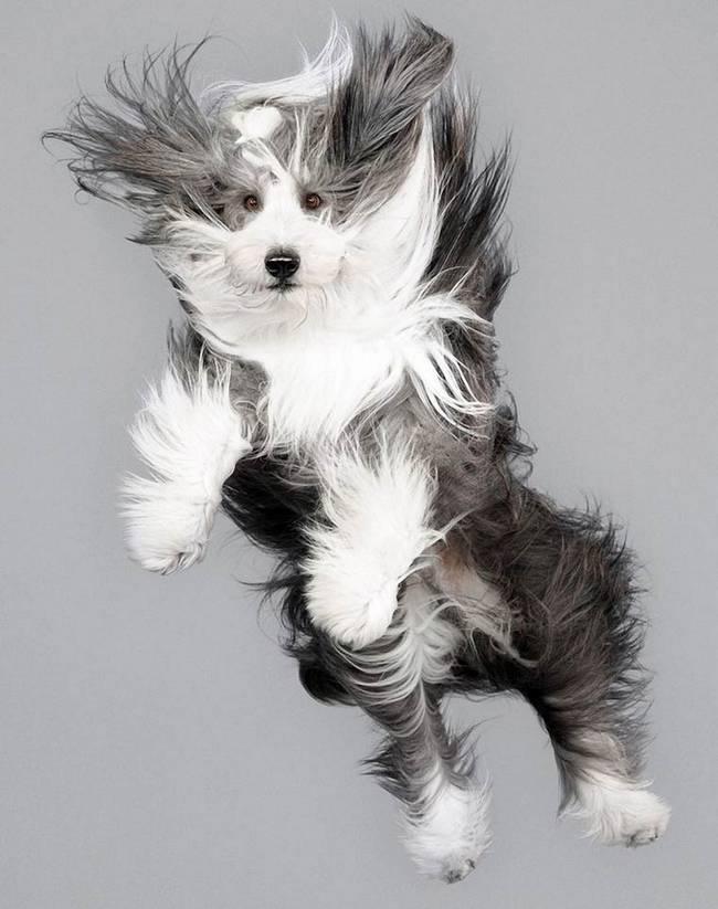cachorros-voadores-4