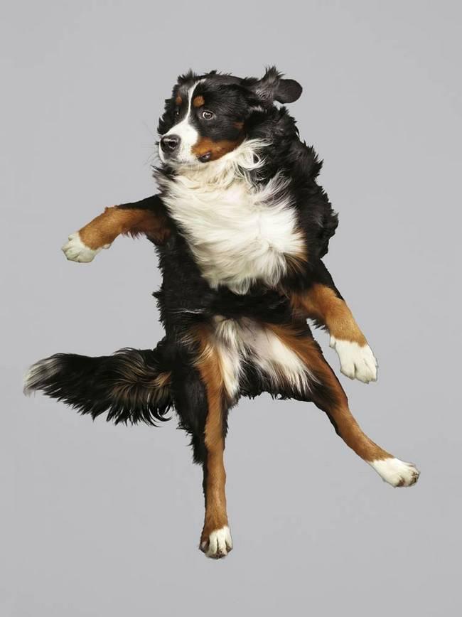 cachorros-voadores-5