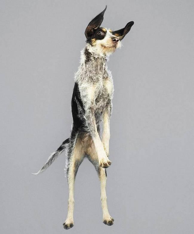 cachorros-voadores-9