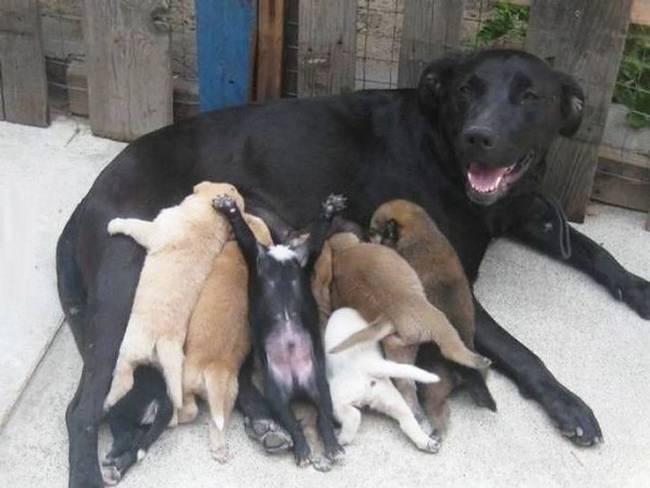 cadelas-com-seus-filhotes-1