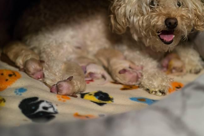 cadelas-com-seus-filhotes-11