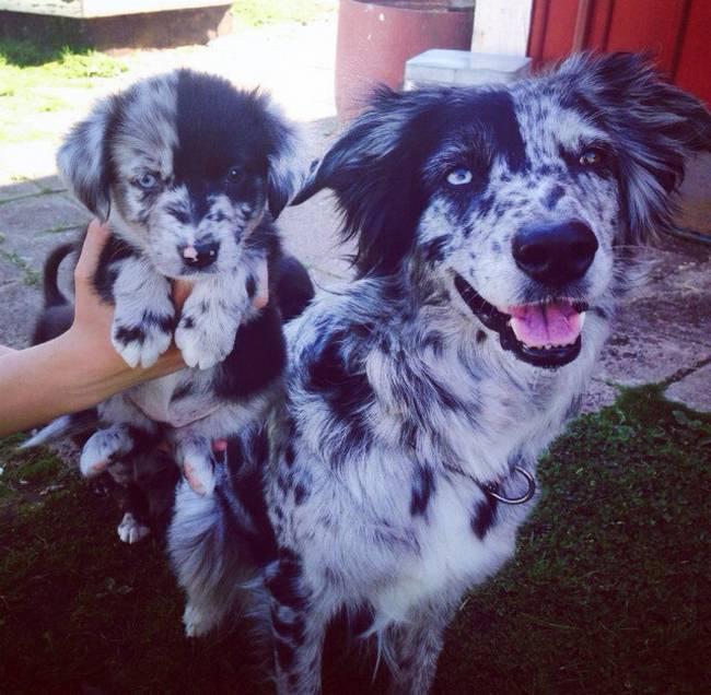 cadelas-com-seus-filhotes-13