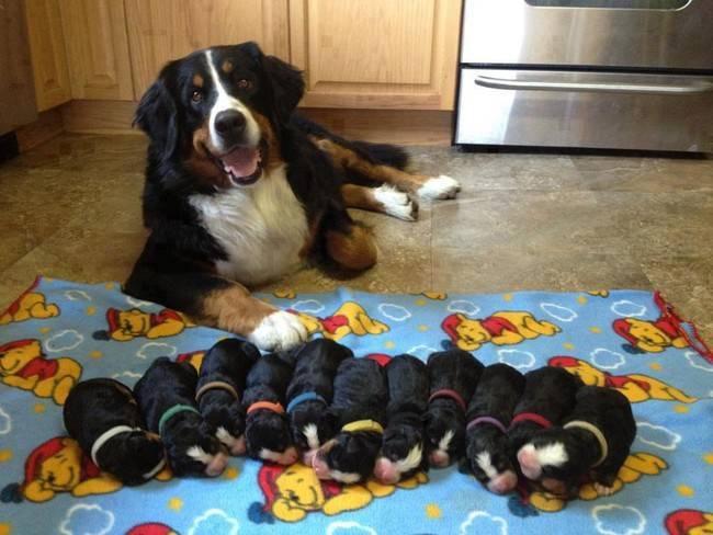 cadelas-com-seus-filhotes-14