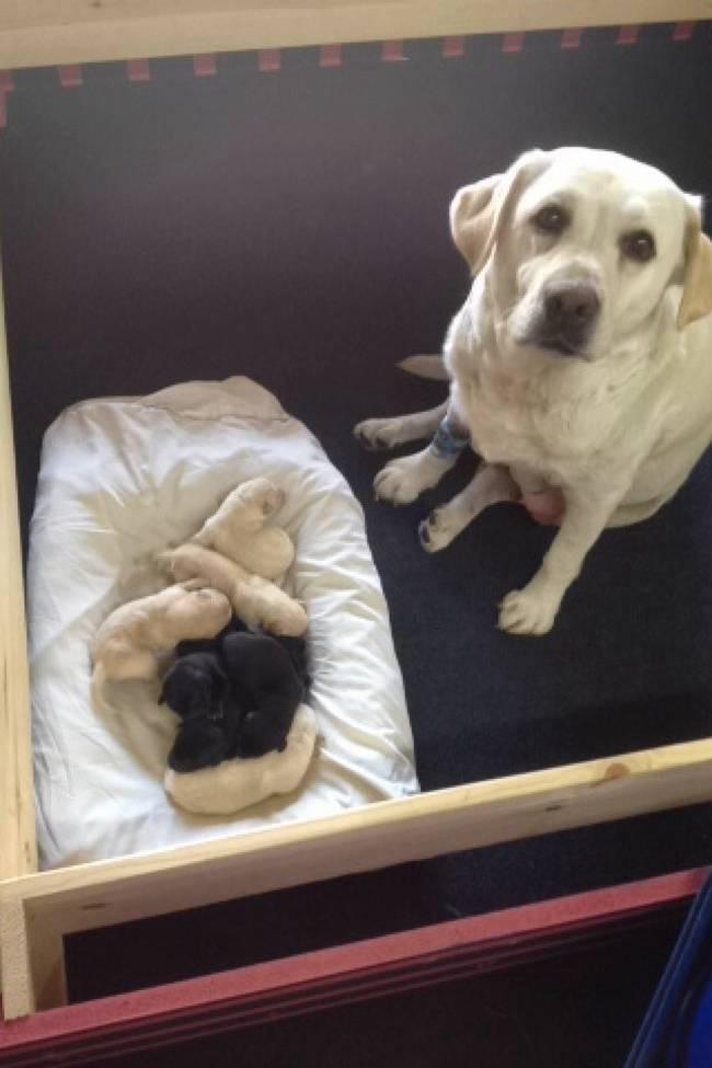 cadelas-com-seus-filhotes-15