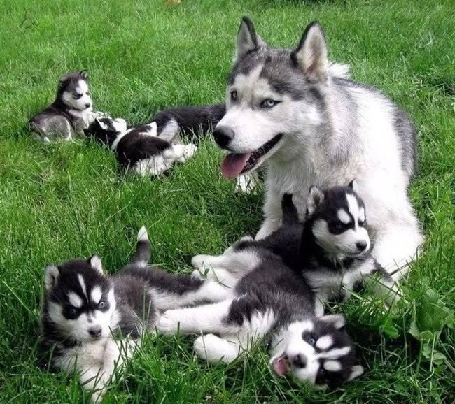 cadelas-com-seus-filhotes-16
