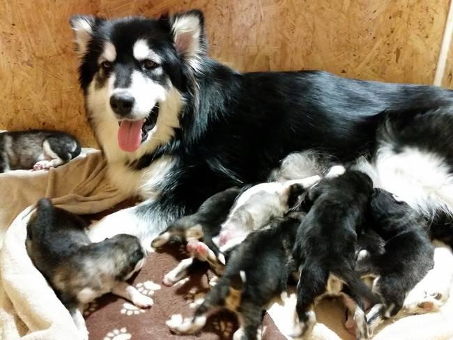 cadelas-com-seus-filhotes-17