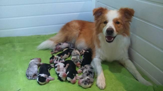 cadelas-com-seus-filhotes-19