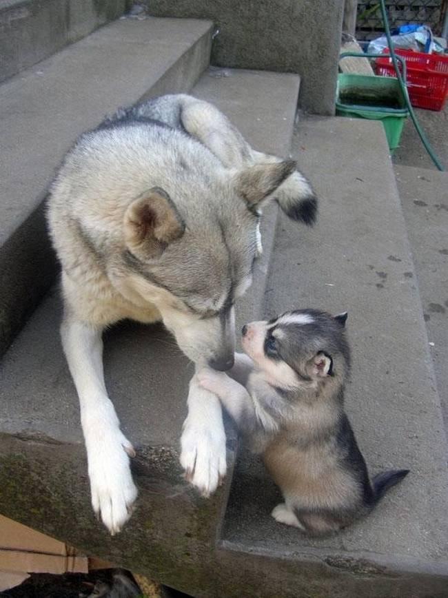 cadelas-com-seus-filhotes-20