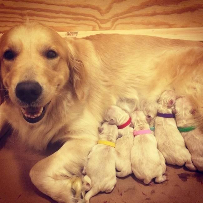 cadelas-com-seus-filhotes-21
