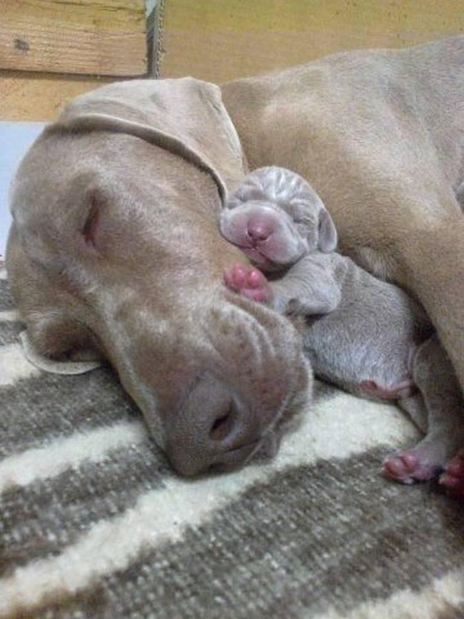 cadelas-com-seus-filhotes-22