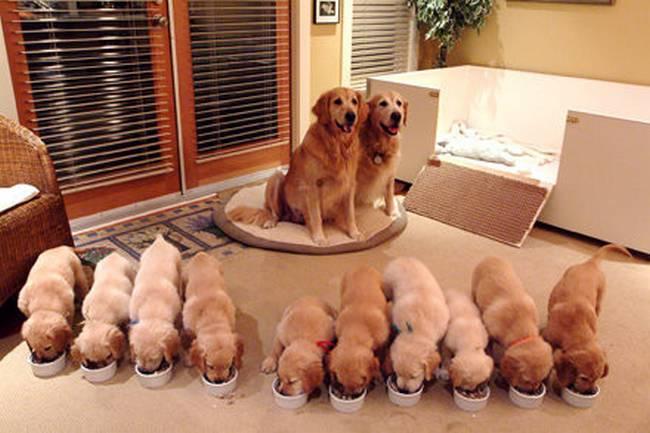 cadelas-com-seus-filhotes-3