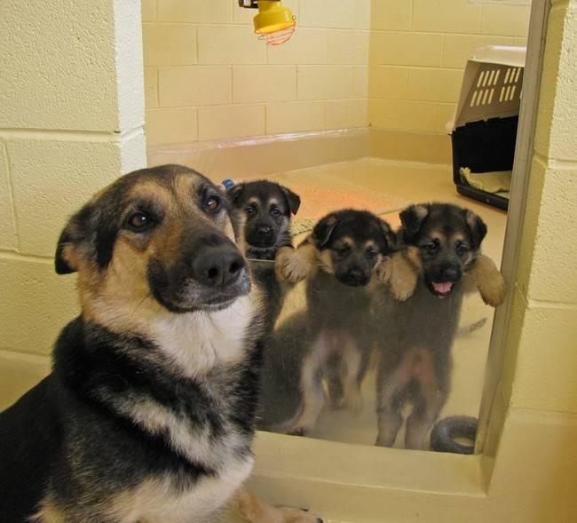 cadelas-com-seus-filhotes-4